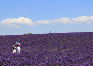 kent escort strolling in lavander field with man