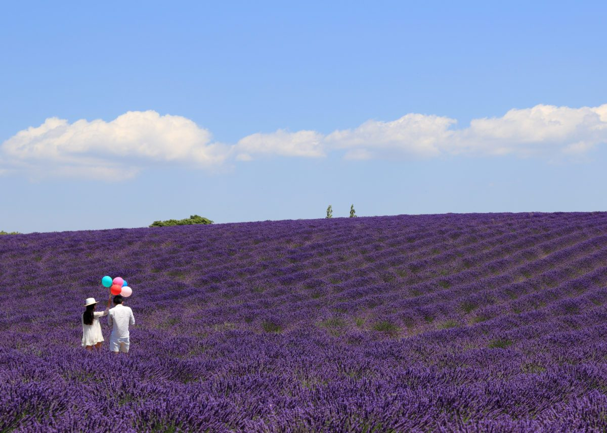 kent escort strolling in lavander field with man